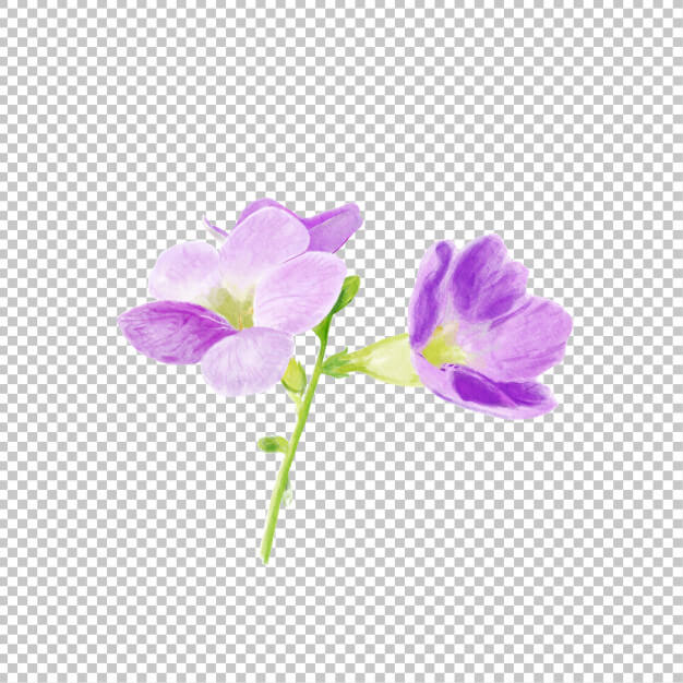 Purple flower watercolor Premium Psd