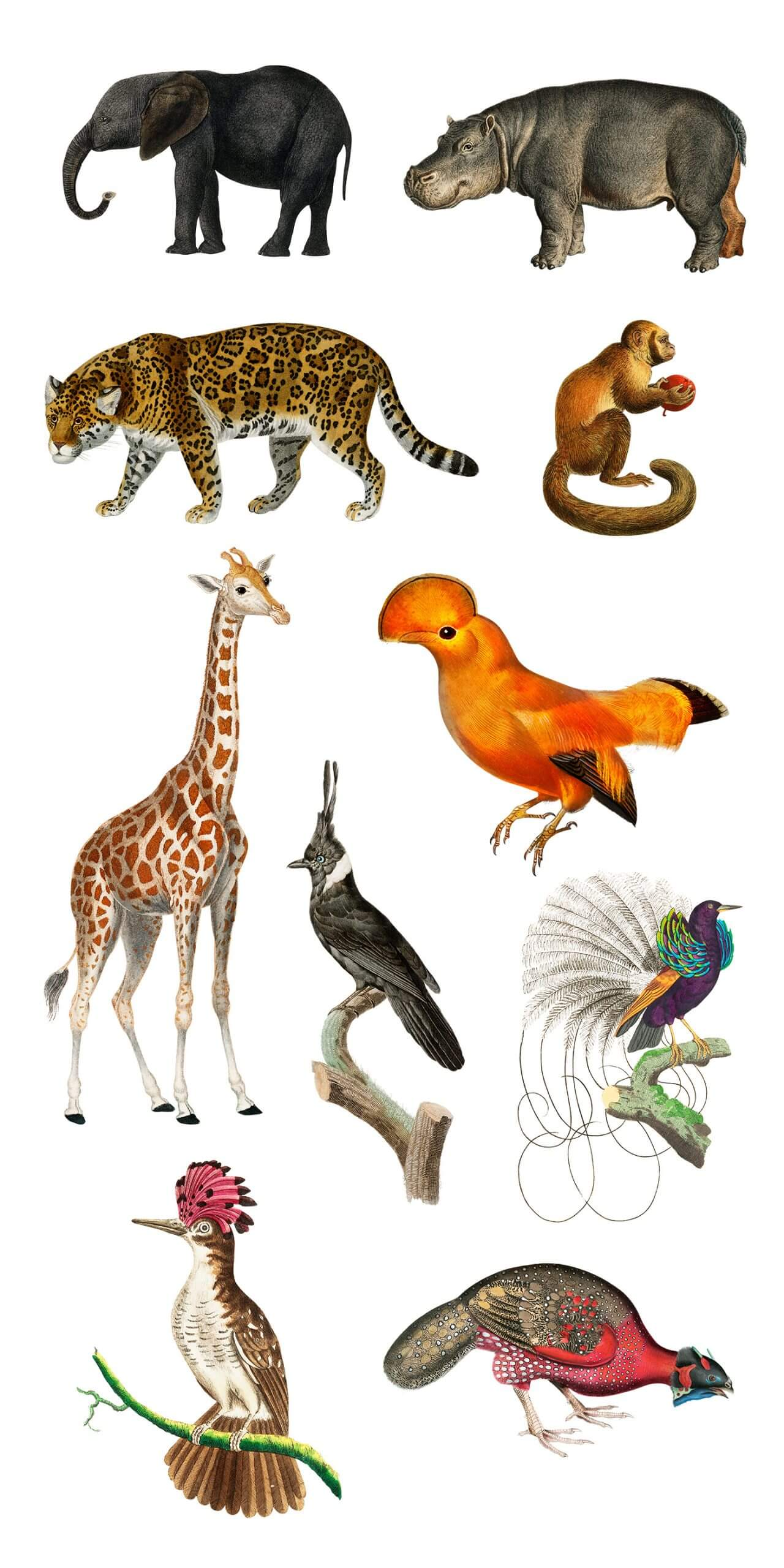 A Set of Free Wild Animal And Bird Illustrations