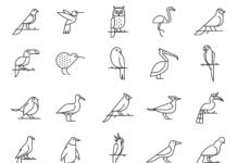 Free Realistic 20+ Bird Vector Icons