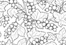 Black Currant Seamless Pattern