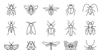 Free Real 20+ Insects Vector Icons
