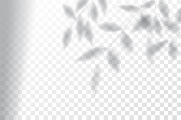 Shadow, overlay effects mock up, window frame and leaf of plants Premium Vector