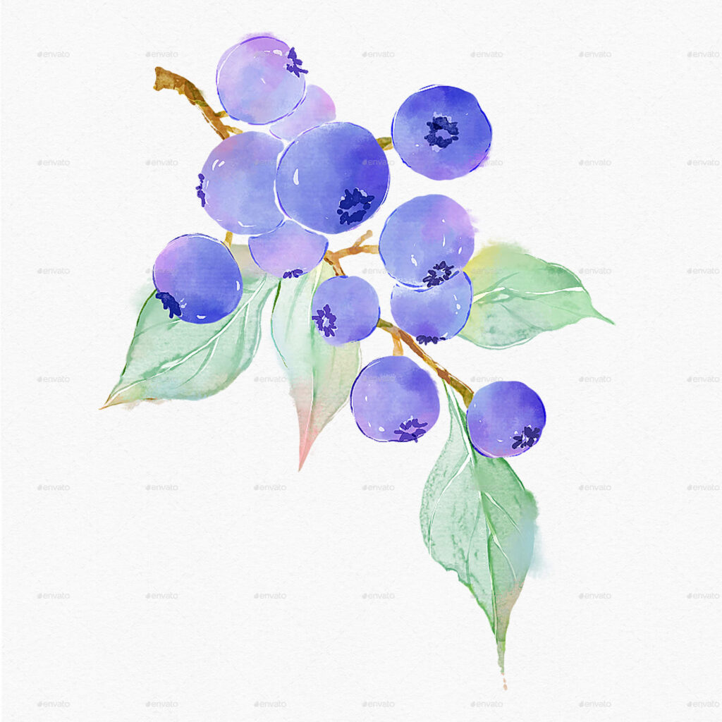 Blueberry Watercolor Illustrations Clipart (1)