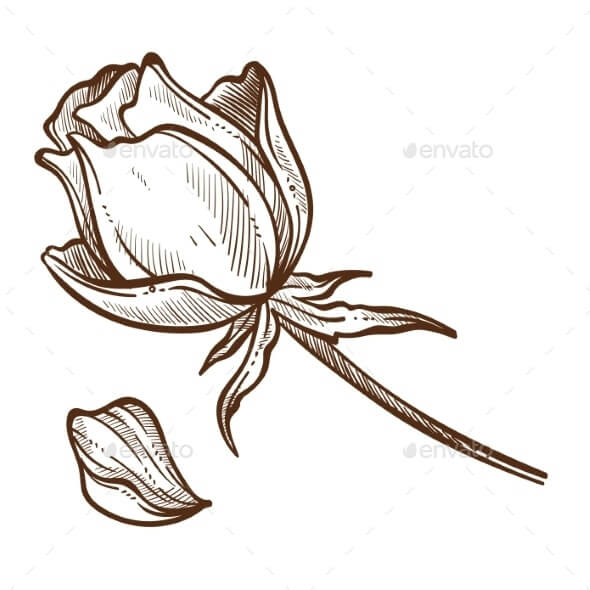 Flower Rose Plants Isolated Sketch Bud and Petal (1)