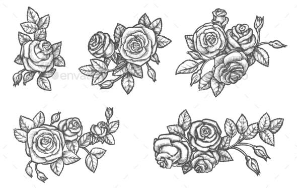 Set of Isolated Rose Flower Sketch Plant Drawing (1)